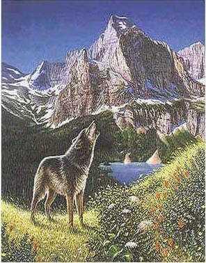 4wolf.jpg (32123 bytes)