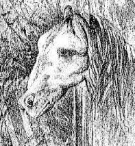 horsefrog1.jpg (22208 bytes)